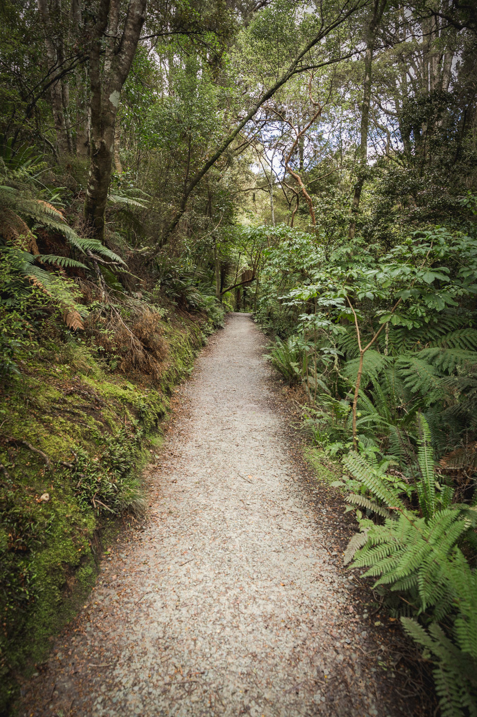 The Trail to Purakaunui Falls, South Island, New Zealand