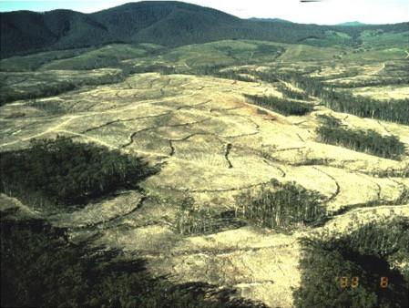 habitat fragmentation के लिए चित्र परिणाम