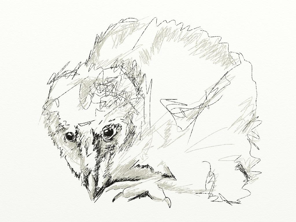 Birding And Impalas Predators And Art