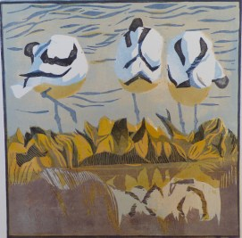 Preening Avocets
