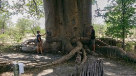 This baobab was so big we could only fit the base of the trunk of it in the photo!
