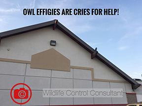 Owl Effigies Are Cries for Help
