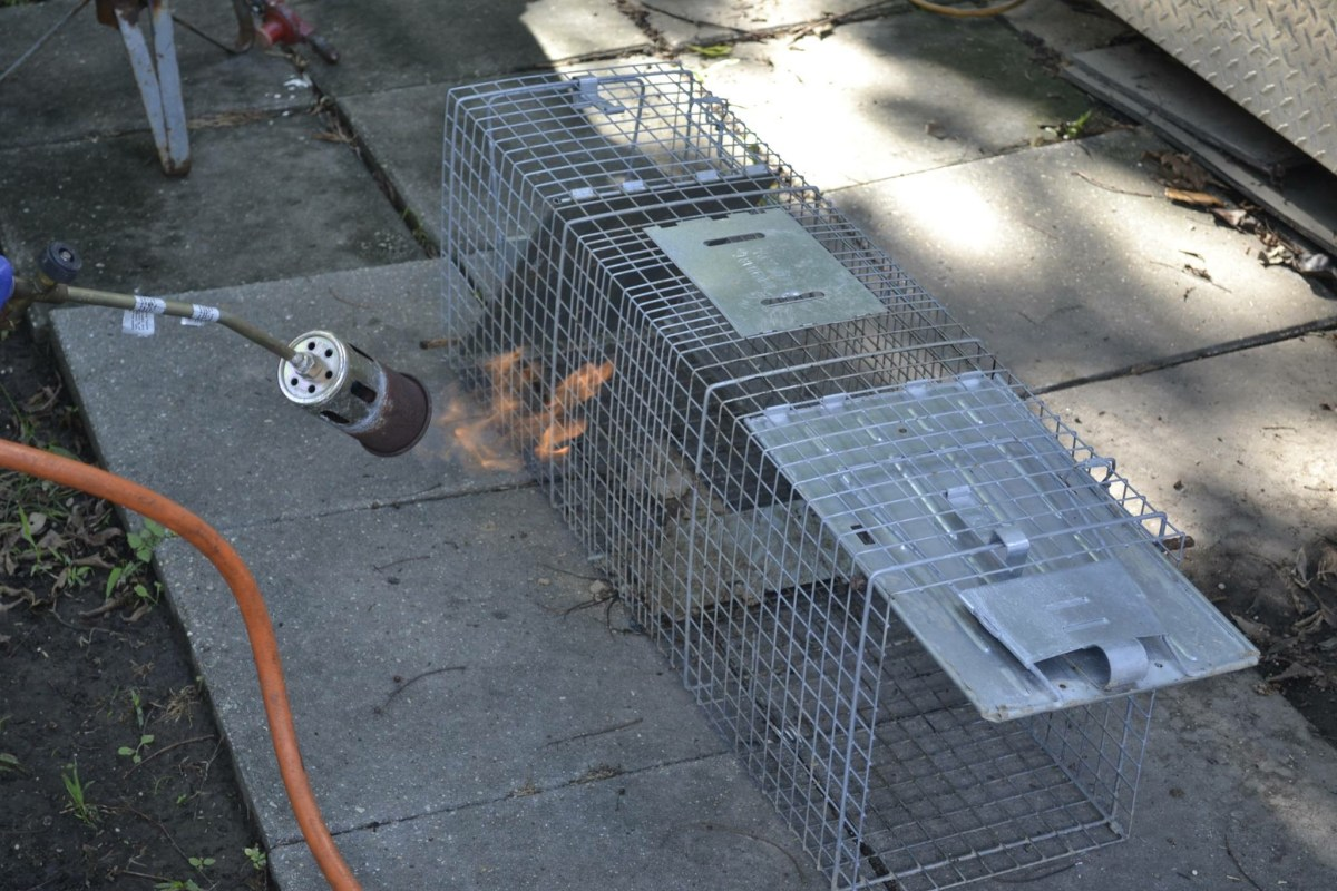 Using a weed burner to clean a cage trap. Photo: Charles Parker of Parker's Wildlife Control, New Orleans.