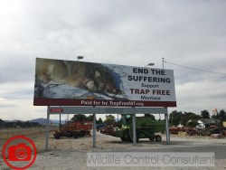 Anti trapping billboard by Trap Free Montana