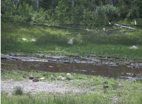 Lost Lake Before (10) web