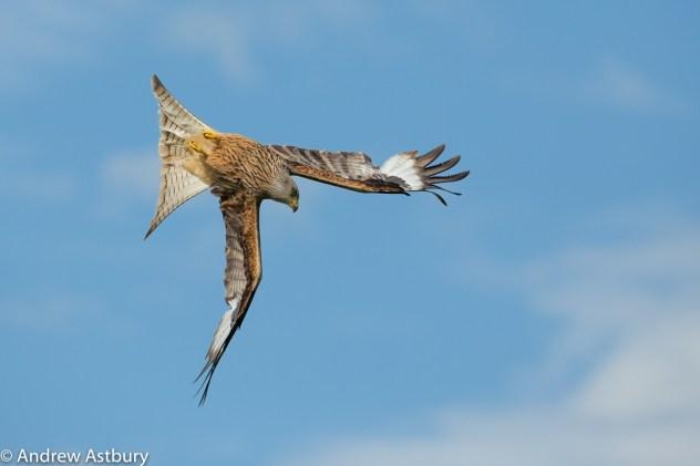 Autofocus Guide to Long Lens Bird in Flight Photography