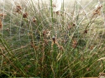 Spiders&Webs_-1000273