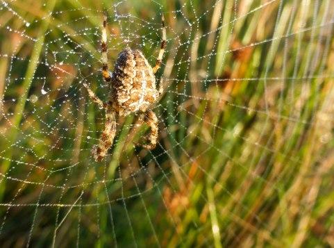 Spiders&Webs_-1000308