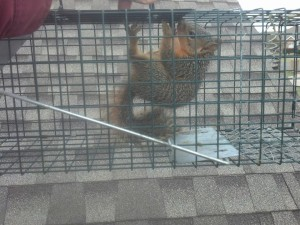 Squirrel Extractions