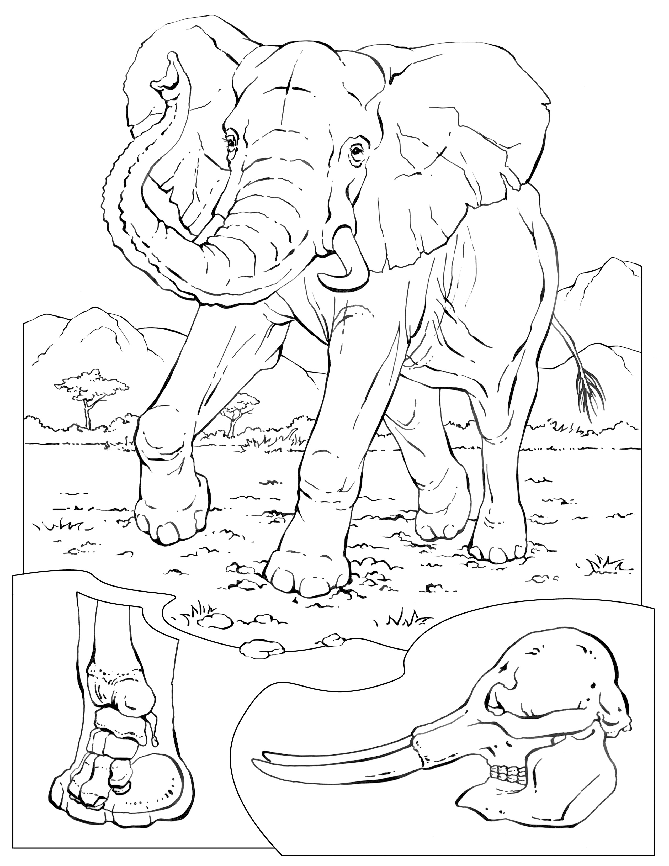 Coloring Pages Wildlife Research Amp Conservation