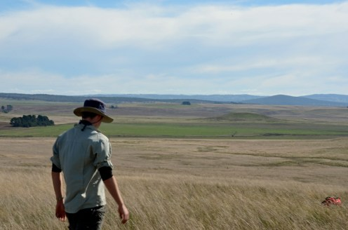 A survey team hunts for earless dragons in the grasslands of the Monaro - photo credit Anna MacDonald