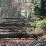 Even a medium sized storm can decimate a large portion of Florida forest, and force wildlife to seek shelter elsewhere