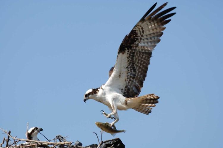 Humane Wildlife Removal Tampa
