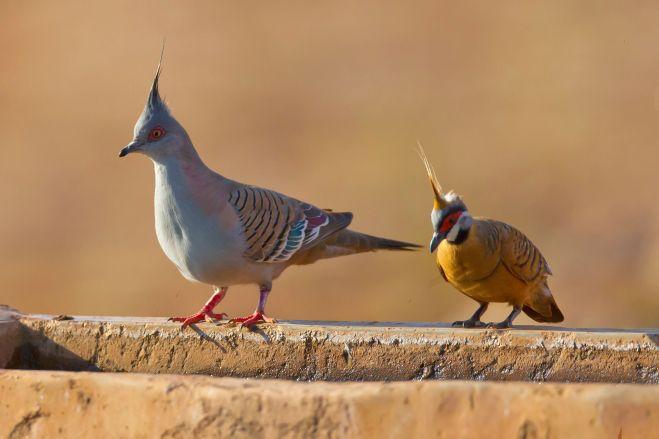 bird-removal-lakewood-ranch