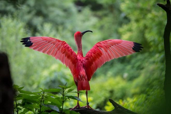 bird-deterrents-bradenton