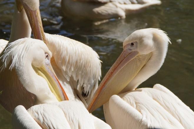 bird-removal-sarasota