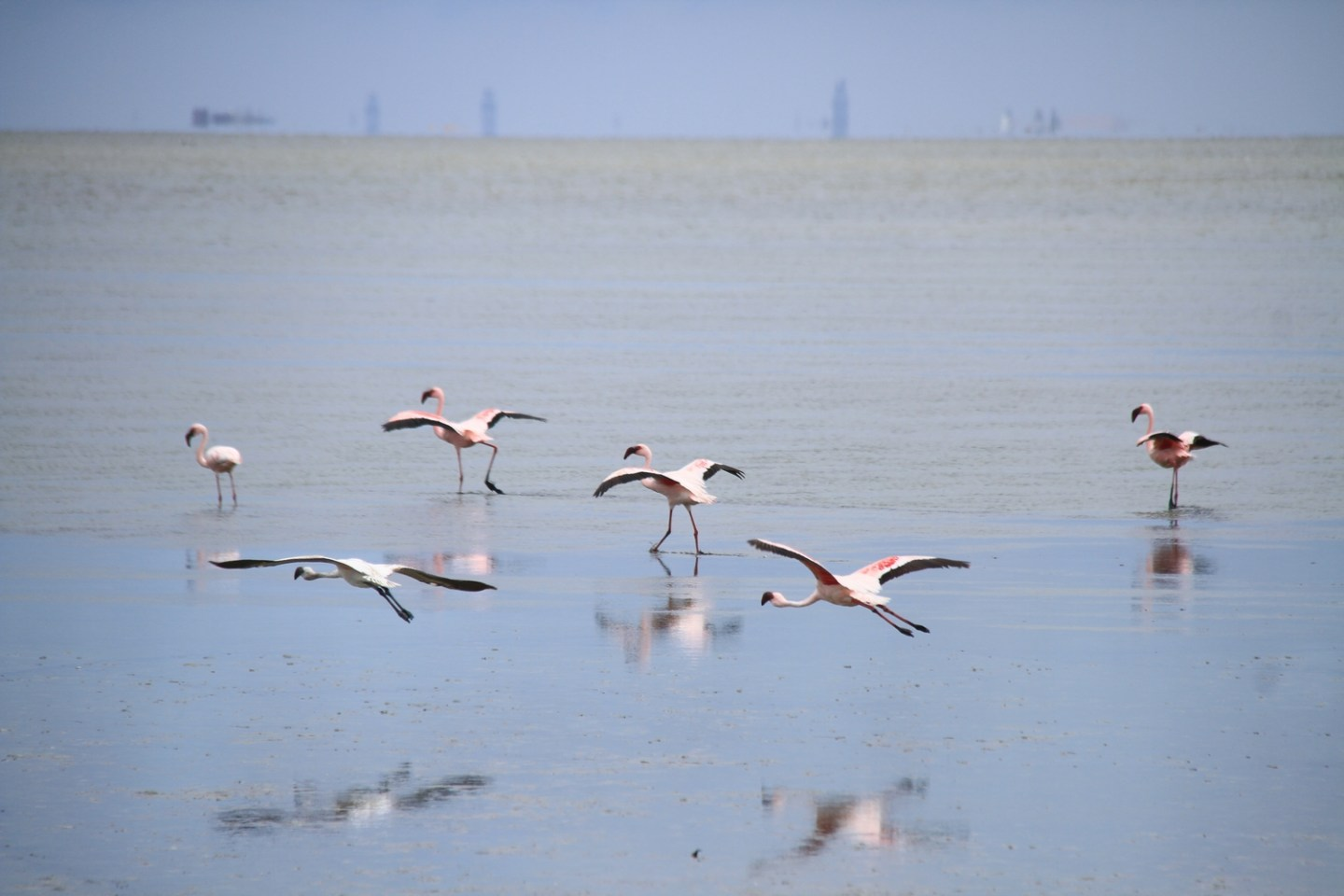 Walvis Bay Lagoon Flamingos