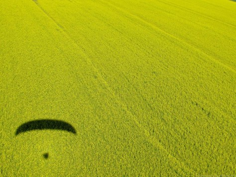Airborne over the canola