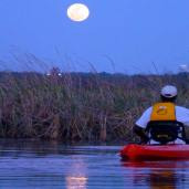 """The Stars Fell On Alabama"" Coastal Kayak Tour"