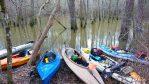Swamp Kayaks at the Champion Cypress