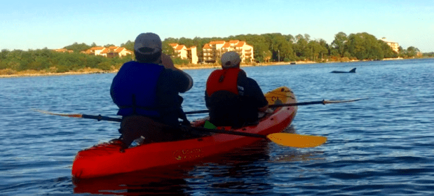 Dolphins at Sunset Kayak Tour