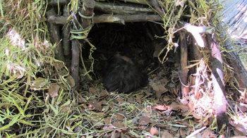 Biwak schlafen Survivalmind
