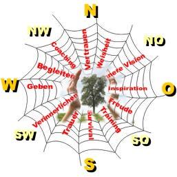 Spinne wildnis.at