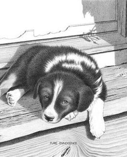Bernie Brown - Cute Border Collie Puppy