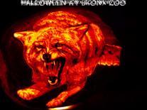 Bronx Zoo Halloween