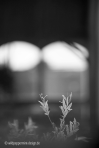 diffus, weide, diffuses licht, unscharf, sw-foto, wildpeppermint-design.de