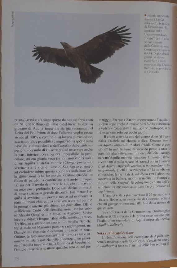 Quaderni di Birdwatching EBNITA
