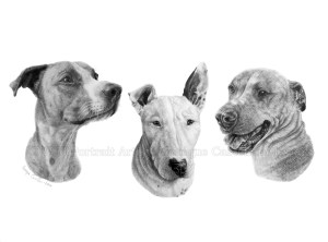 """Spencer, Bruno and Roxy"" 11x14inch commission, graphite on Fabriano Artistico HP watercolour paper. Art by Wild Portrait artist. SOLD."