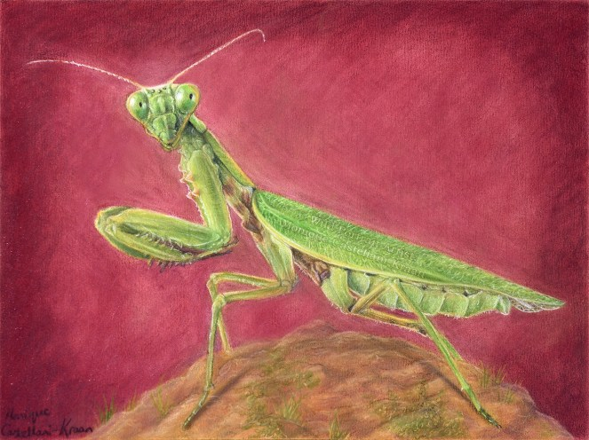 """The Alien"" - 29 x 22cm, colored pencil on UArt 800-grain paper. Created using brushandpencil Powder Blender and Textured Fixative by Alyona Nickelsen"