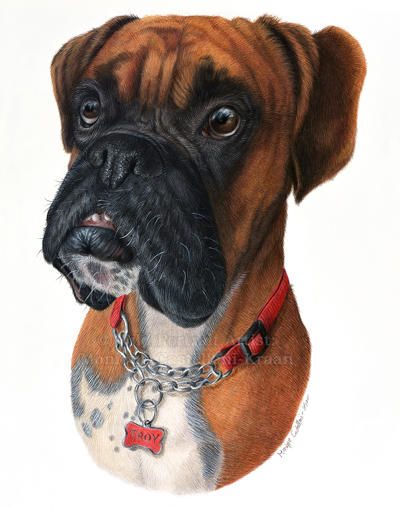"""Troy"" - 11 x 14inch commission in coloured pencil. Art by Wild Portrait Artist. SOLD."