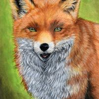 """""""Sly Mister Fox"""" - 21 x 29.7cm (A4) mixed media painting. I used Derwent Inktense Blocks and pencils, as well as Caran D'ache Neocolor IIs for some of the detail work in the final stages of the painting. Art by Wild Portrait Artist. Available for sale."""