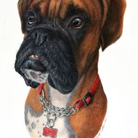 """""""Troy"""" - 11 x 14inch commission in coloured pencil. Art by Wild Portrait Artist. SOLD."""