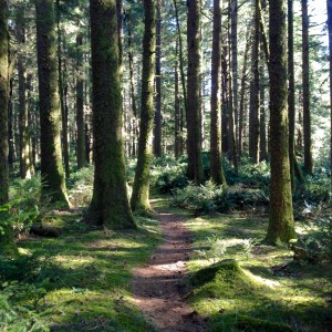 old-growth forest trail