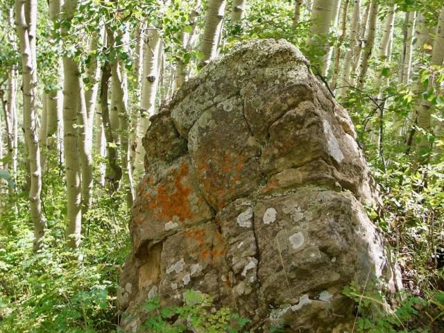 Aspen Rock Lichen