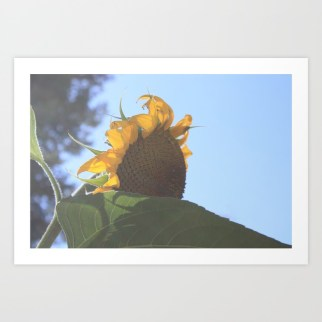 spirited-sunflower-prints