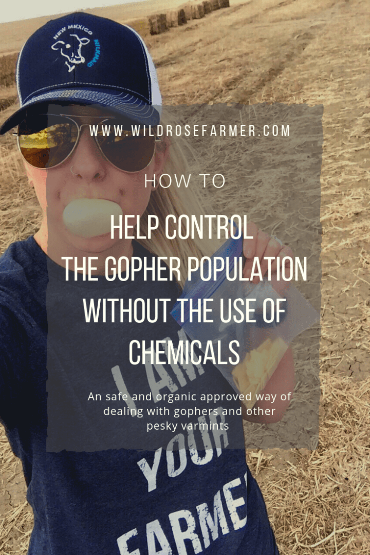 How to Help Control The Gopher Population Without The Use of Chemicals
