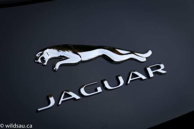 Jaguar badge 2