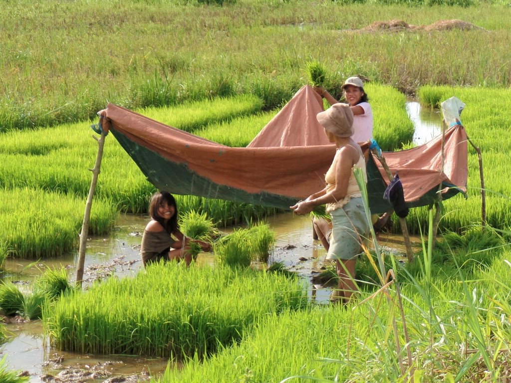 Rice Farming: May Update