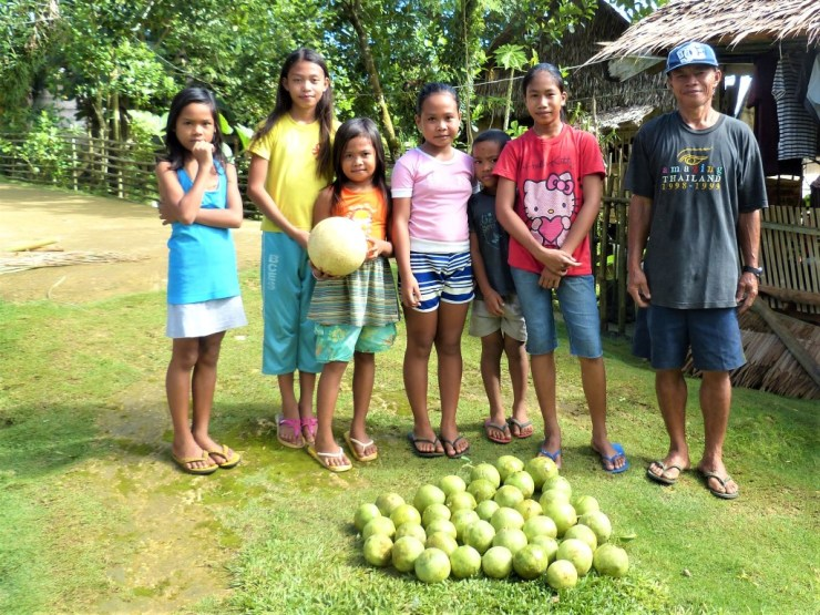 Pomelo harvest in Buhing Kalipay village. Siargao island, Philippines