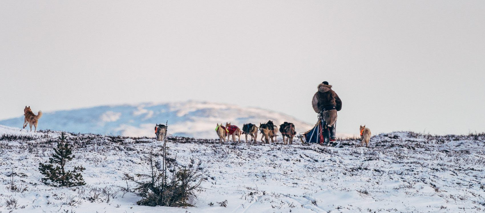 Dog Sledding Sweden