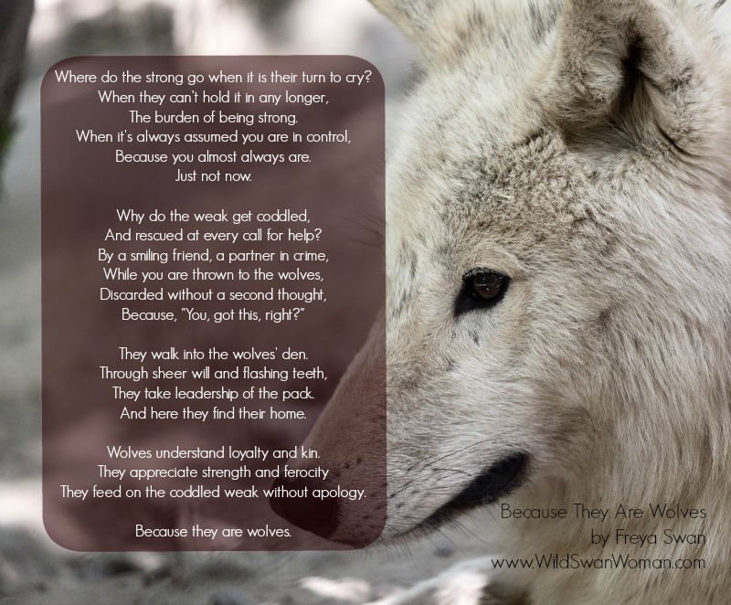 Because They Are Wolves   Freya Swan   www.WildSwanWoman.com