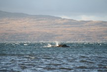 Waves crash at the entrance to Carsaig Bay