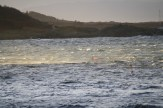 Wind carries the spume
