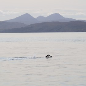 Lottie swimming the Sound of Jura