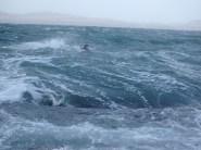 Duggie in the storm