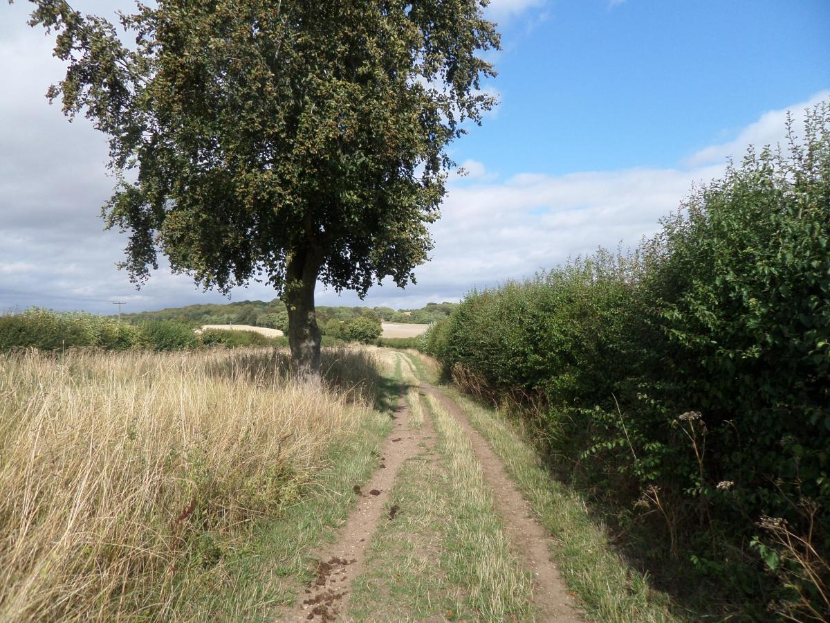 Herts embraced 3.4:  The Icknield Way